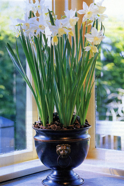 How To Top Dress Potted Plants